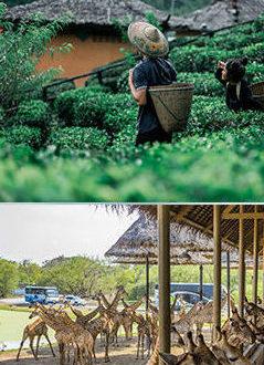 เที่ยวเมืองไทยดีกว่าไม่ต้องคิดอะไรมาก
